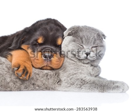 Cat and rottweiler puppy  sleeping together. Isolated on white background