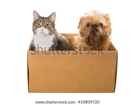 Cat and the dog sitting in a cardboard box, isolated