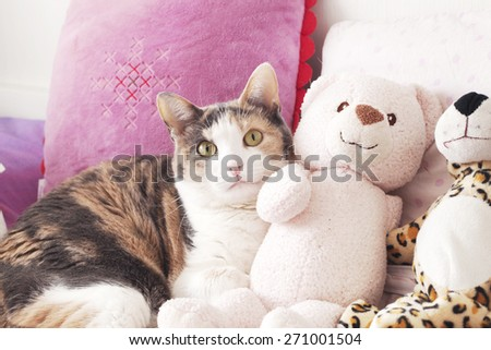 Cat and the peluche - stock photo