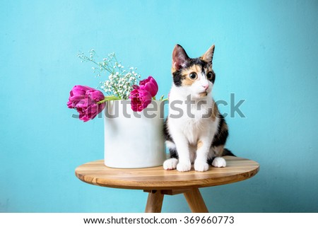 cat and the vase with tulips