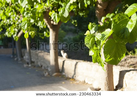 Cat and trees, Mediterranean landscape - stock photo