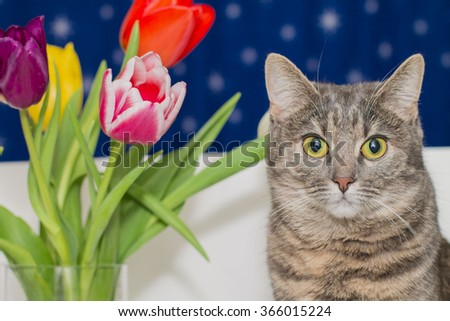 Cat and tulips. - stock photo