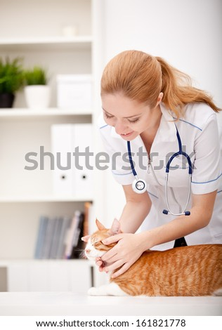 cat and vet - stock photo