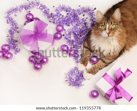 cat and violet christmas present on white background - stock photo