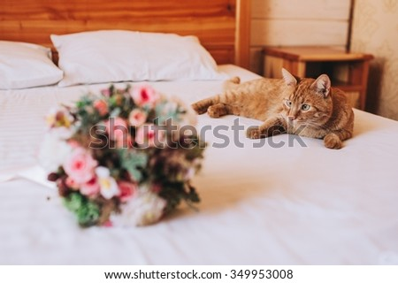 cat and wedding bouquet - stock photo