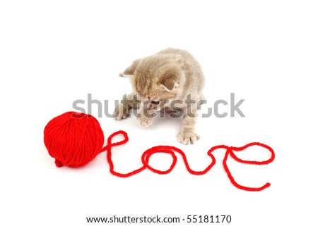 cat and wool - stock photo
