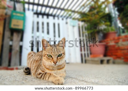 Cat angry look with home background - stock photo