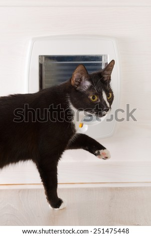 Cat attempting to pass the cat door to the toilet - stock photo
