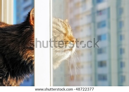Cat behind a window in a city - stock photo