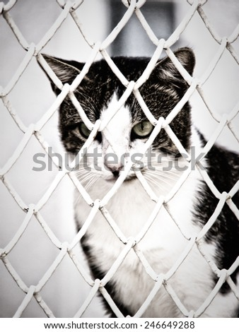 cat behind bars, jailed - stock photo