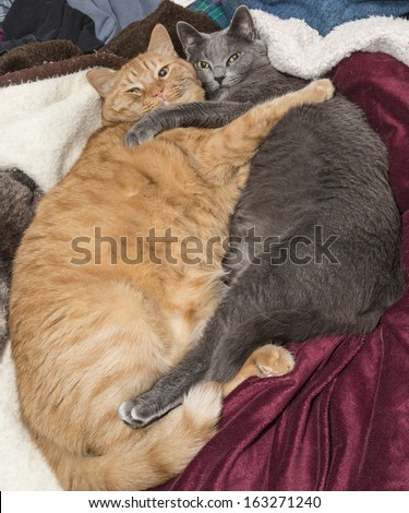 Cat best friends hugging on bed - stock photo