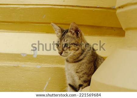 Cat between stupas - stock photo