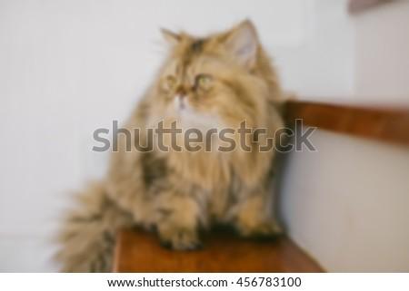 cat blur background, Persian cat blur background - stock photo