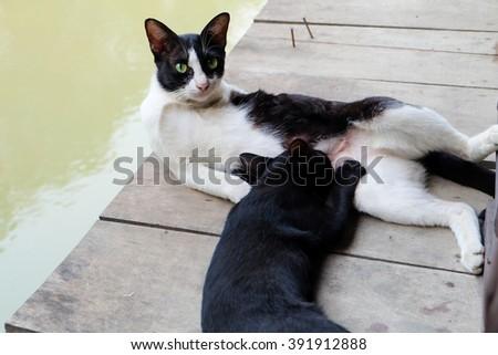 Cat breastfeed kitten on the raft   - stock photo