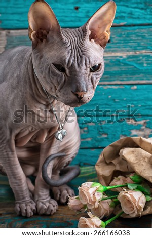 cat breed Sphynx posing near a small bright bouquet of roses.Selective focus - stock photo