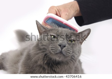 Cat brushed on head