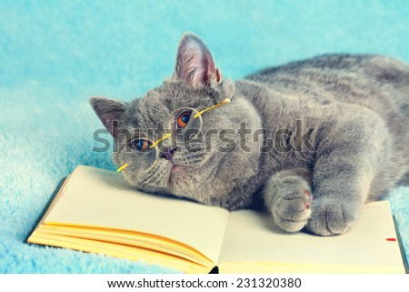 Cat businessman wearing glasses lying on book - stock photo