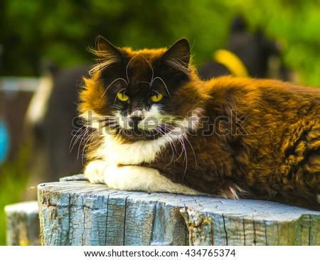 cat. Cat Looking At Camera. Black cat with green eyes,black cat on legs,cat in the room,cat in light,loving cats,black cat,head cat,closeup cat - stock photo