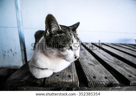 cat, cat on wood, cat white