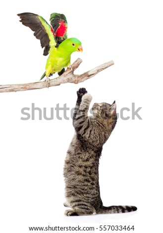 Cat catches a bird.  isolated on white background