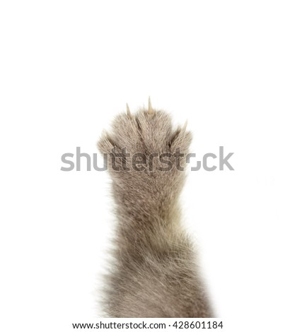 cat claws on a white background