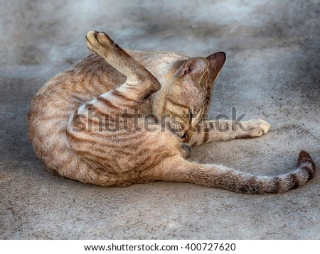 Cat Cleaning Itself Outside in the Summer  - stock photo
