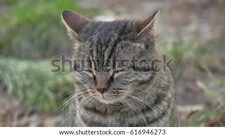 Cat closed his eyes sitting on the nature sad funny