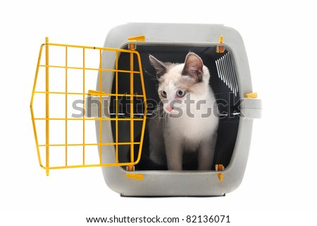 cat closed inside pet carrier isolated on white background
