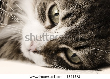 Cat closeup posing - stock photo