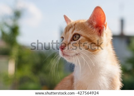 Cat color ginger looking out of the camera in the home garden with green background - stock photo