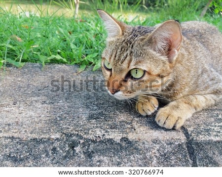 Cat concentrate to the front - stock photo