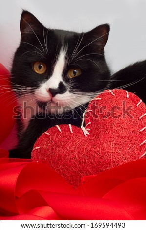 Cat congratulates on valentine's day