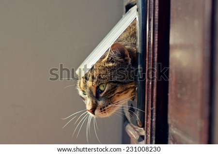 Cat crawls out of the house through a hole - stock photo