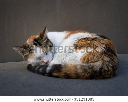 Cat curled up asleep on stone bench. Ginger white and tabby.