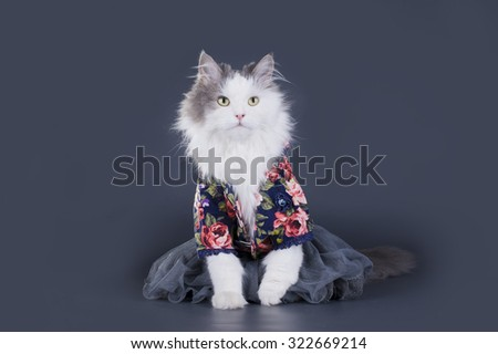Cat-designer presents his collection of clothes - stock photo