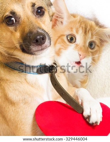cat, dog and heart - stock photo