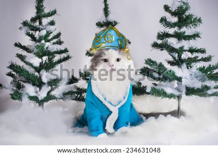 cat dressed as Snow Maiden in the fir forest - stock photo