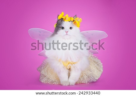 cat dressed as spring butterflies on a pink background isolated - stock photo