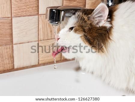 cat drinking water in bathroom - stock photo