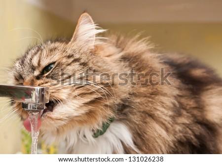 Cat drinks water - stock photo