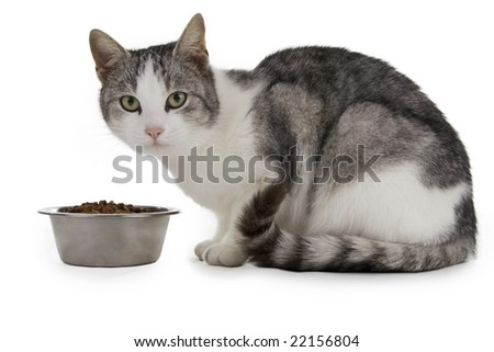 Cat eating, cat with food cup, white background. - stock photo