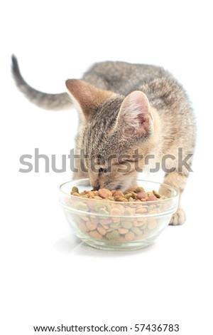 Cat eating dry cat food from glass bowl - stock photo