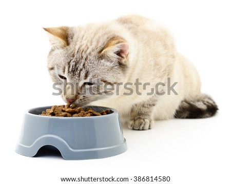 Cat eating dry food on white background. - stock photo
