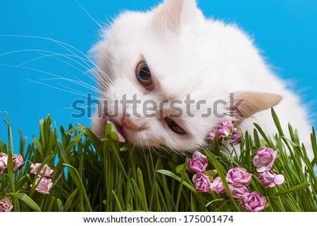 Cat eating grass - stock photo