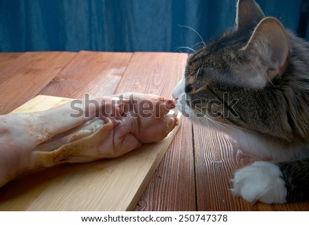Cat eating piece of meat from the kitchen table - stock photo