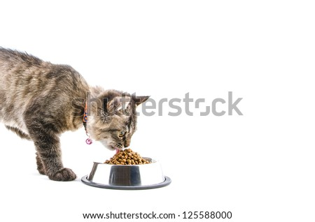 cat eats dry cat food on white background