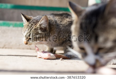 cat eats meat on nature - stock photo
