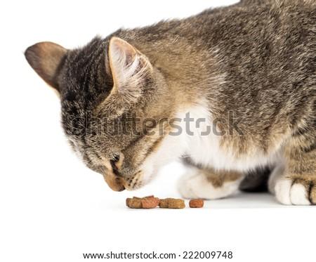 cat eats on white background - stock photo