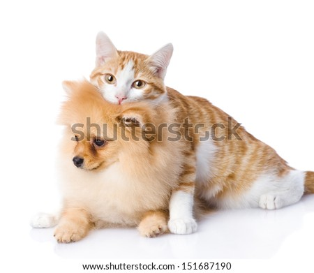 cat embraces a  dog. looking at camera. isolated on white background
