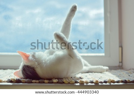 Cat enjoying on the windowsill